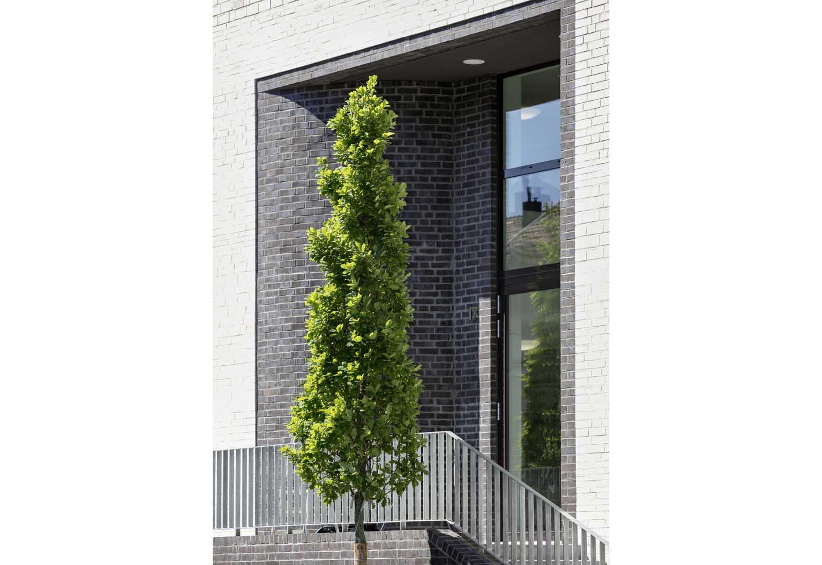 Architekt BonnStudierendenwohnheim Drususstraße - Neubau von 73 Studierendenapartments in Bonn-Castell, Bodendenkmal, KfW-55 - Koenigs Rütter Architekten
